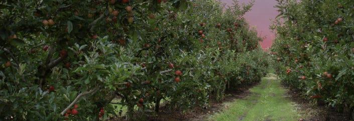 the summmit applethorpe orchard