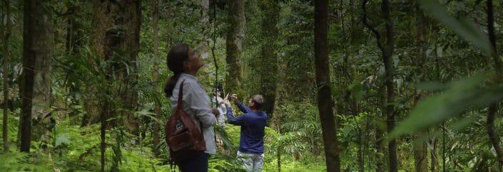 goomburra rainforest