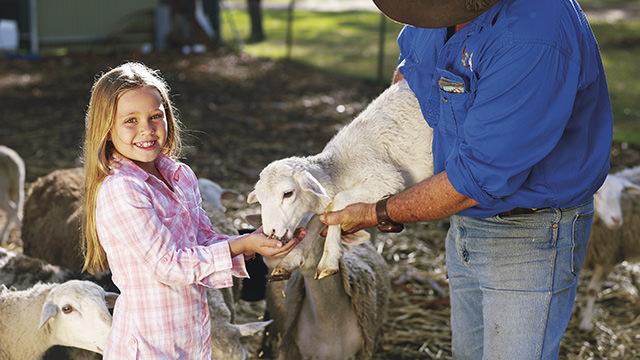 Girl feeding lamb