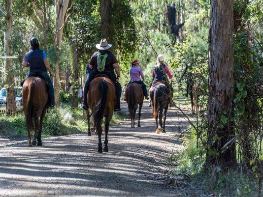Killarney Waddle Saddle Amp Pedal Southern Downs