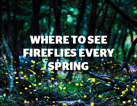 WHERE TO SEE FIREFLIES EVERY SPRING