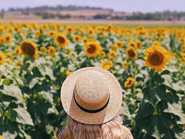 Girl in front of sunflower field at Allora